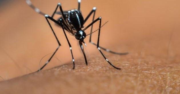 dengue-3
