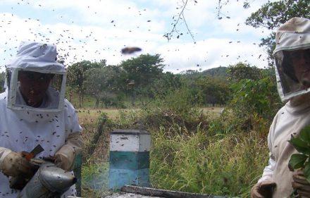 i7856-apicultores