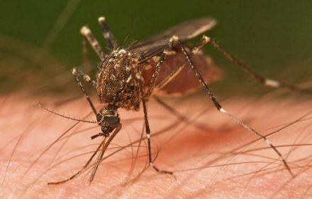 zika-sauza-624x330