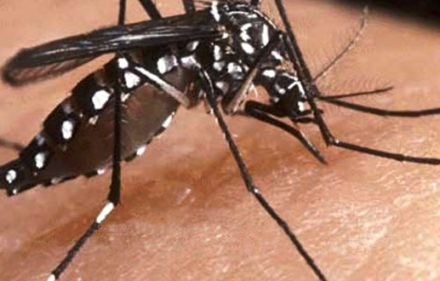 zika-dengue-610x330