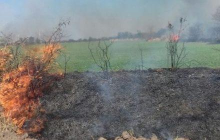 quema-pastizales-660x330