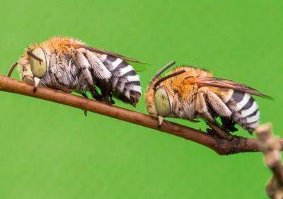 abejas_0
