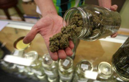 legal_marihuana_afp1-08