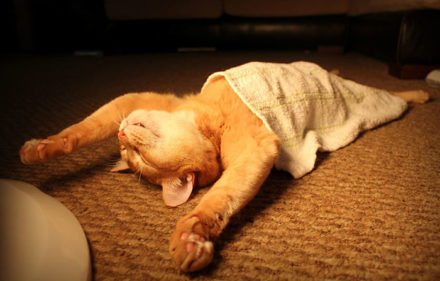 problemaas-digestivos-de-gatos