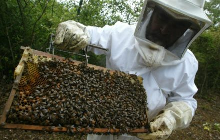 apicutor,abejas.vitoria igoraizp 31-05-07