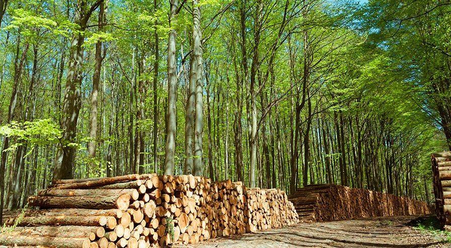 eiffage-energia-biomasa-incendios-forestales
