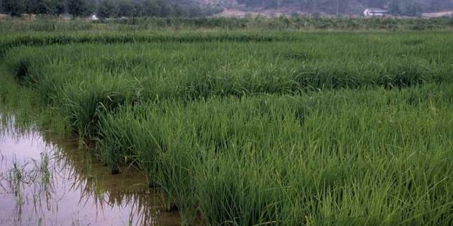 produc-arroz-660x330