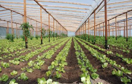 Agricultura.plantacion