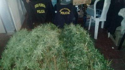 casa-marihuana
