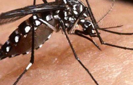 dengue-corrientes