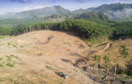 1565698950_archive_deforestacion__3__rz1250